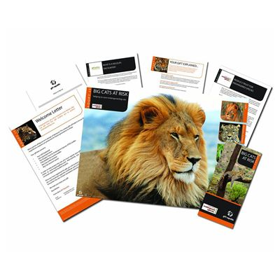 Gift Republic Adopt a Big Cat Gift Box - Image 1