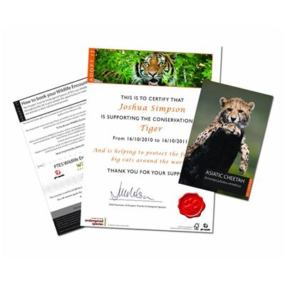 Gift Republic Adopt a Big Cat Gift Box - Image 2